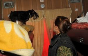Смоленские таможенники проверили своих собак