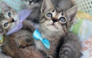 27 декабря добровольцы у «Современника» соберут подарки для животных