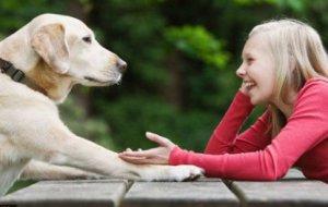 Гаджет для понимания животных