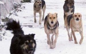 В центре Смоленска стая бродячих собак пугает людей