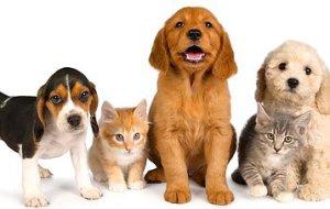 Как выбрать средство от блох и клещей для щенков и котят?