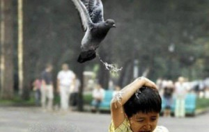 Ученые открыли тайну голубей