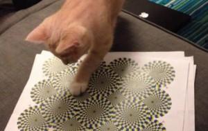 Коты видят оптические иллюзии