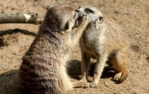 В Смоленском зоопарке выбирают самую милую парочку