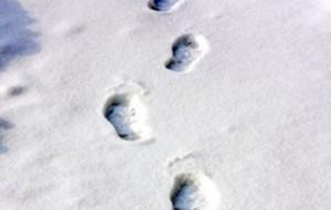 Следы на снегу привели сыщиков к браконьеру, разделавшему лосиную тушу в лесу