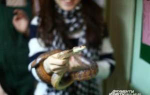 Смоленский зоопарк предлагает посетителям сделать селфи с животными
