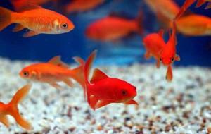 Смоленский зоопарк приглашает заглянуть в мир аквариумных рыбок