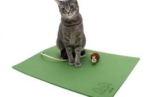 Йога для кота