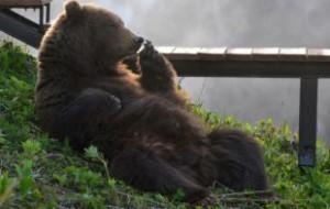 В Смоленской области просыпаются медведи