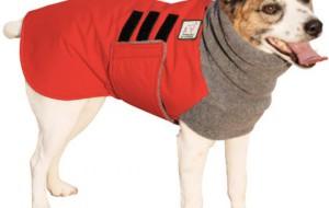 Зимнее пальто специально для джек рассела
