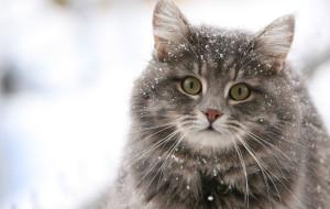 Как узнать, чего хочет кошка?