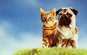 8 причин завести кота или собаку