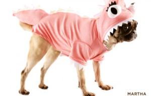 Собака-акула