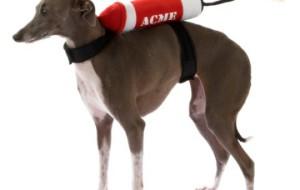 Динамит на спине у собаки