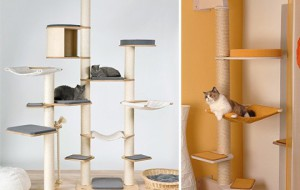 Целая система для кошачьих развлечений