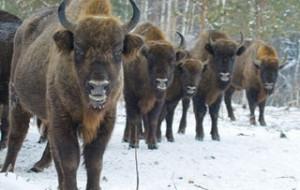 В Смоленском поозерье активизировались браконьеры и «черные копатели»