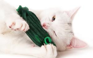 Все кошки любят огурцы
