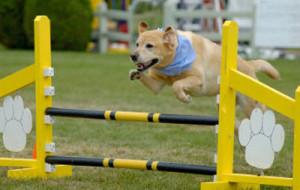 Правила тренировки собак