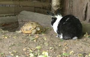 В Смоленском зоопарке открылся уличный вольер