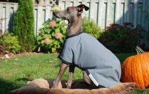 Наряд для активных псов
