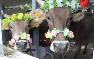 В Смоленске прошла выставка сельскохозяйственных животных