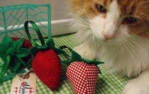 Клубничка для кошки