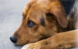 Власти все-таки решили строить в Смоленске собачий приют