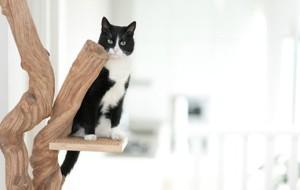 Кот на лиане