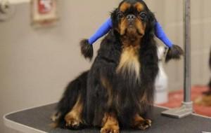 В Смоленске пройдёт Международная выставка собак