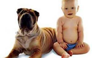 Собаки – это маленькие дети в семье
