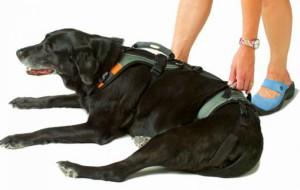 Помощь больным собакам