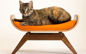 Уют и красота для кошки