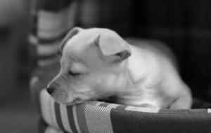 Догхантеры объявили о всероссийской массовой акции по убийствам собак