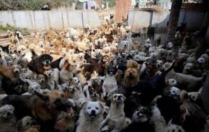 В Смоленском районе строят дом для бездомных собак