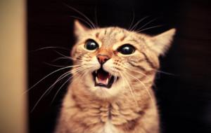 Кошка стала беспокойной после родов