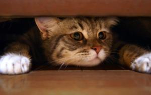 Почему кошка прячется под диван?