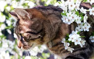 Почему кошки не потеют?