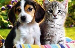 Гипоаллергенные собаки: обзор пород