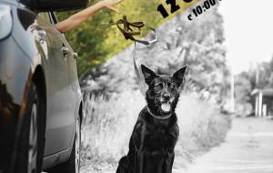 В Смоленске пройдёт благотворительная акция в помощь животным «Не бросай!»