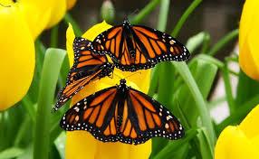 Почему бабочки живут один день?