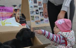 В Смоленске горожане помогли бездомным животным