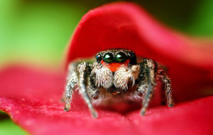 Почему в доме много пауков?