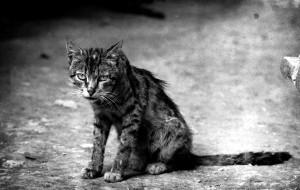 Почему кот (кошка) постоянно линяет?