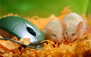 Почему пищат мыши?