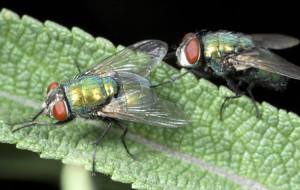 Почему мухи летают?