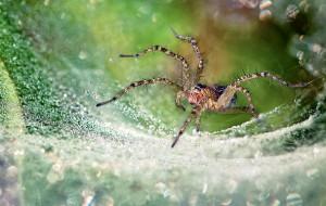 Почему паук плетет паутину?