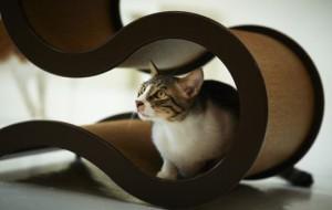 Горки для котов по-тайваньски