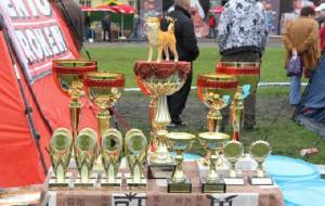 На смоленской выставке собак победителем стал представитель очень редкой в России породы