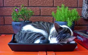 Почему кошка спит в лотке?