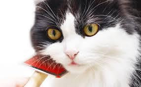 Уход за шерстью кошки: